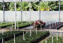 Upright Mister - Greenhouse