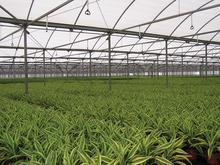 Super Spray - Greenhouse