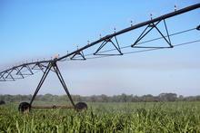 Xcel-Wobbler UP3 TOP - Sugarcane