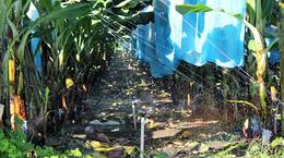 mini-Wobbler & Smooth Drive: Banana Irrigation