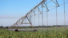 i-Wob UP3: Sugarcane Irrigation