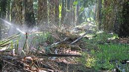 Aspersor de Impacto Série 20: Irrigação de Palmeira de Óleo