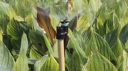 Senninger's Upright Micro-Sprinkler
