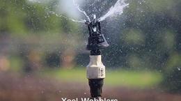 Caso Práctico: Xcel-Wobblers Incrementan Rendimientos de Caña de Azúcar en un 25% en Guatemala