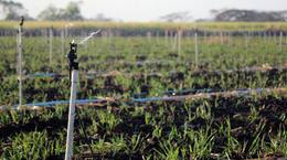 Xcel-Wobbler: Sugarcane Irrigation