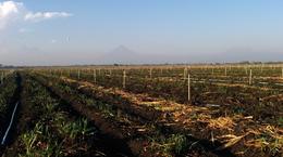 Xcel-Wobbler: Irrigação de Cana-de-Açúcar