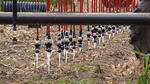 LEPA Bubblers Increase Irrigation Efficiency in Kansas - Interview with Dwane Roth